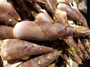 bamboo shoots edible
